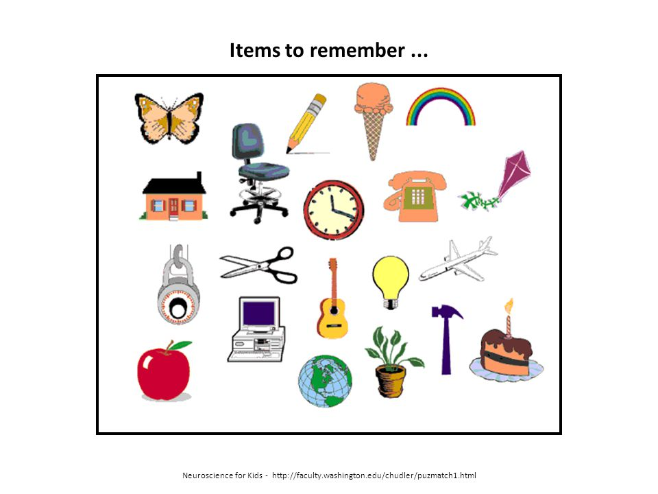 Items to remember ... Neuroscience for Kids - http://faculty.washington.edu/chudler/puzmatch1.html