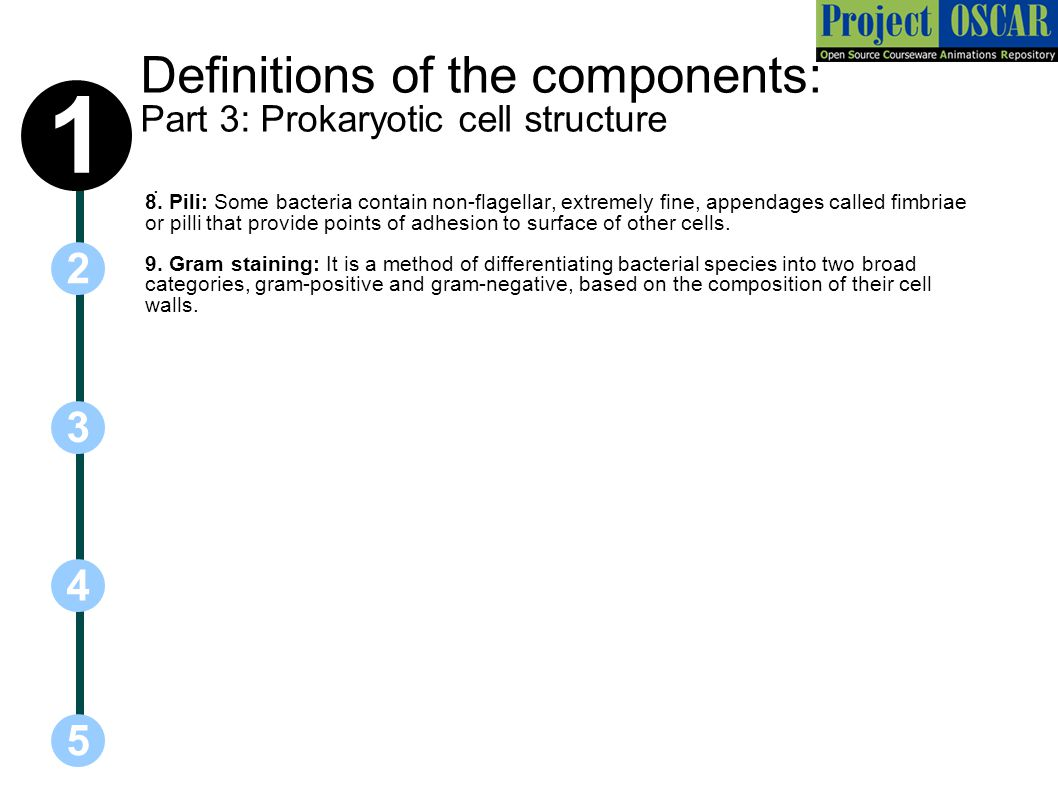 Definitions of the components: Part 3: Prokaryotic cell structure
