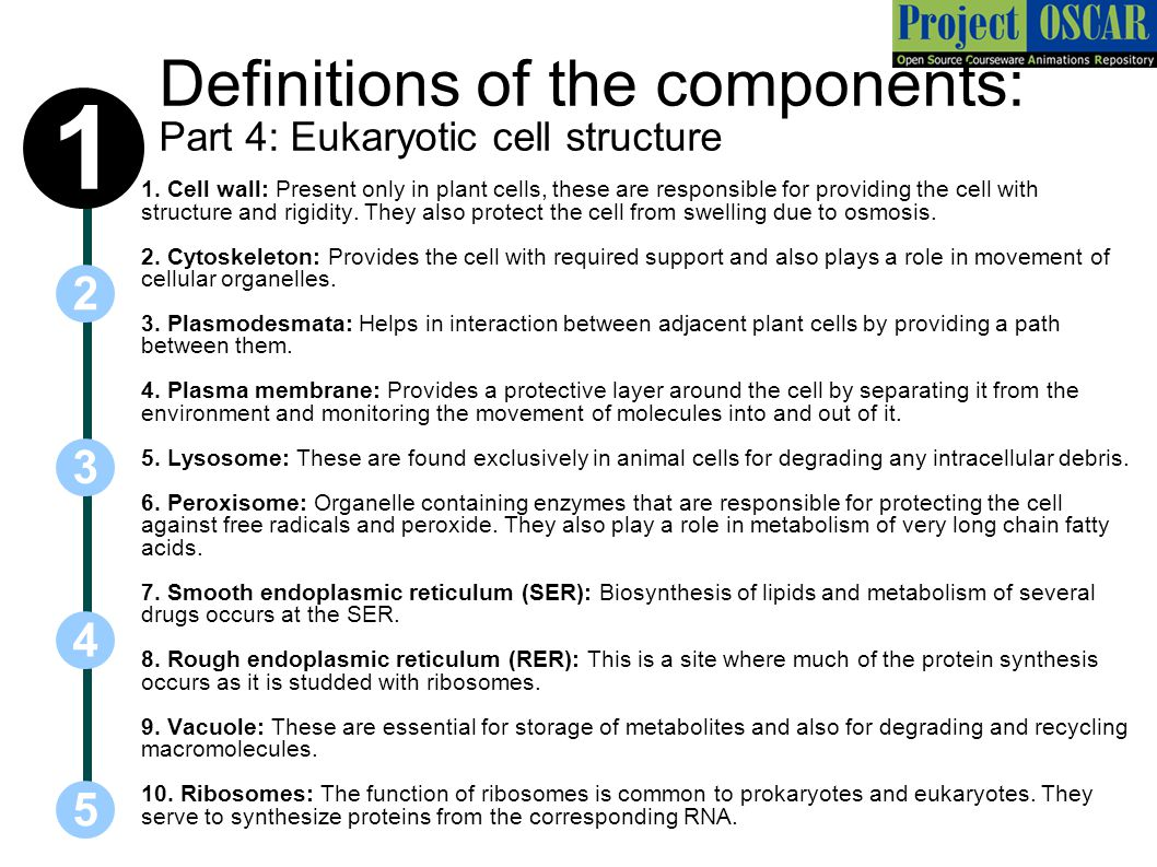 Definitions of the components: Part 4: Eukaryotic cell structure
