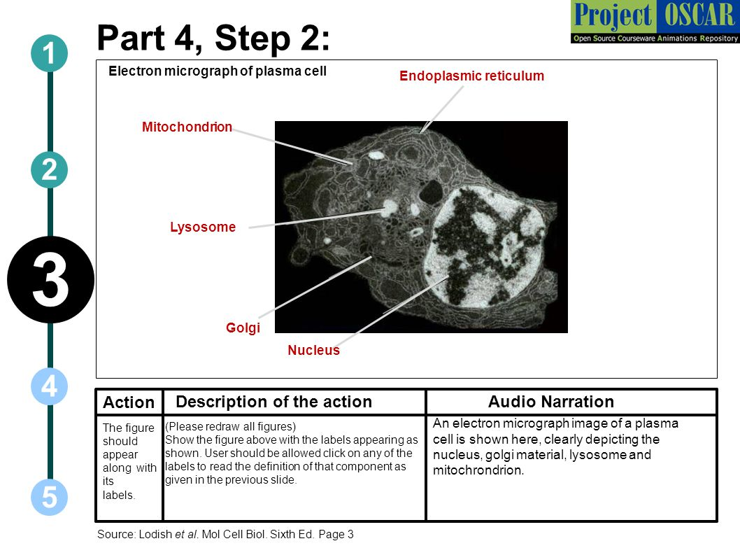 3 Part 4, Step 2: Action Description of the action