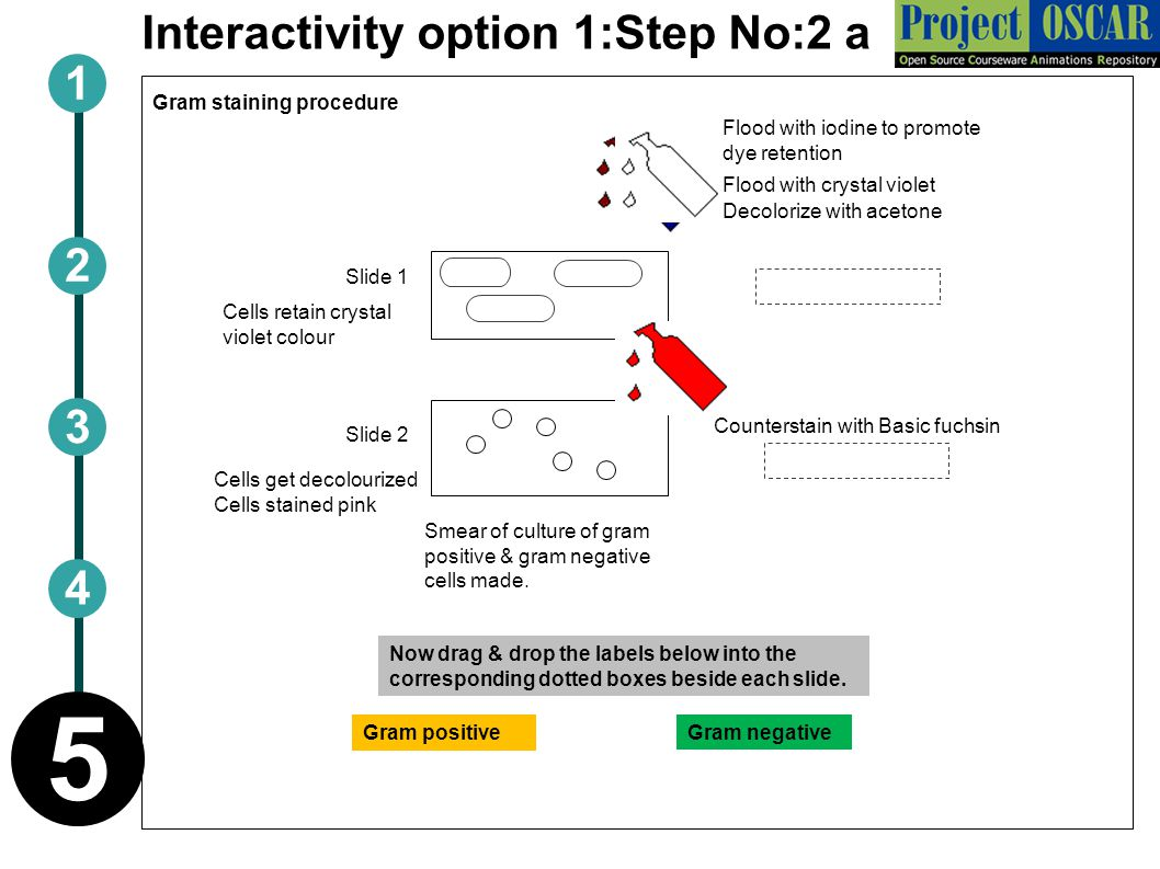 Interactivity option 1:Step No:2 a