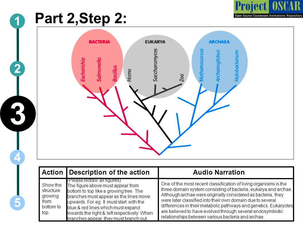 3 Part 2,Step 2: Action Description of the action