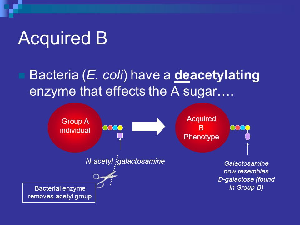 Acquired B Bacteria (E. coli) have a deacetylating enzyme that effects the A sugar…. Acquired B Phenotype.