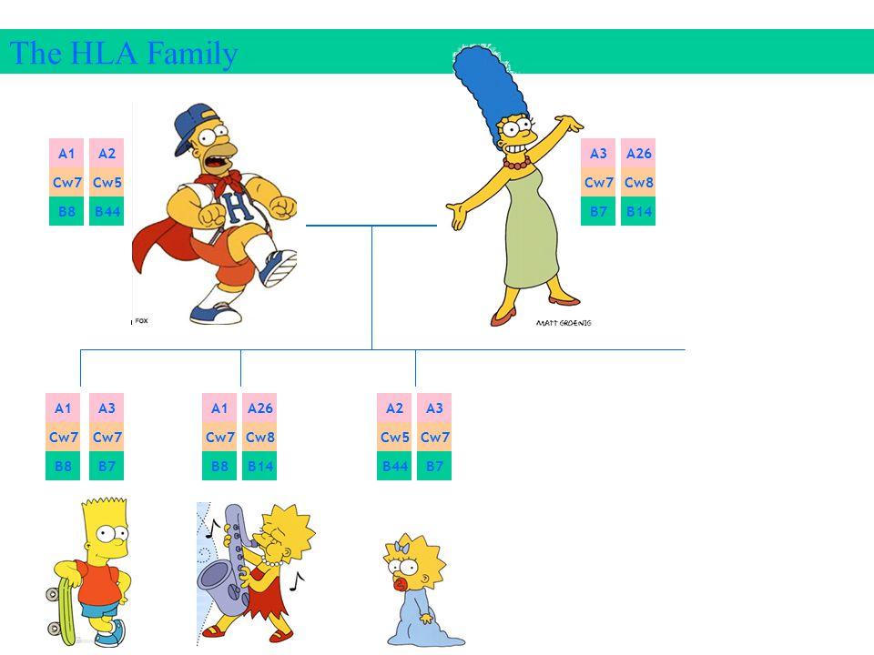The HLA Family A1 A2 A3 A26 Cw7 Cw5 Cw7 Cw8 B8 B44 B7 B14 A1 A3 A1 A26