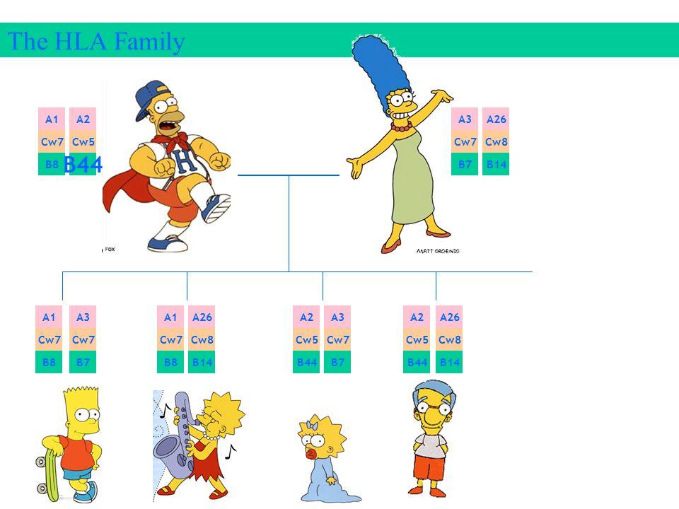 The HLA Family B44 A1 A2 A3 A26 Cw7 Cw5 Cw7 Cw8 B8 B7 B14 A1 A3 A1 A26