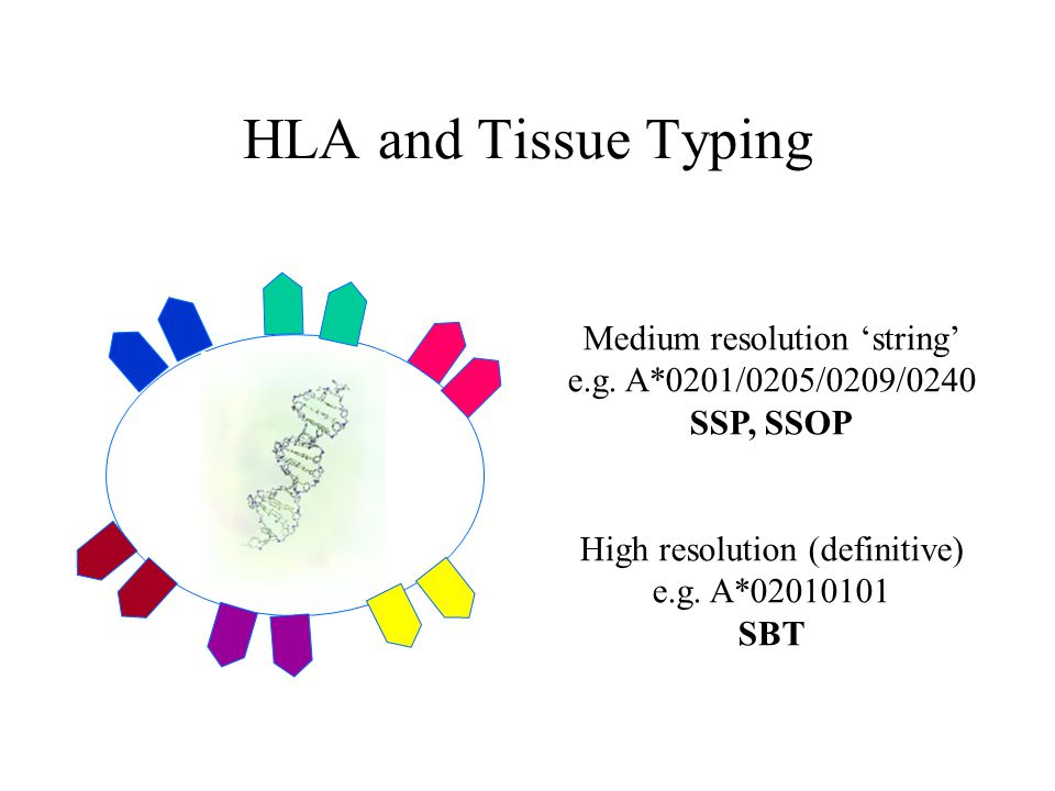 HLA and Tissue Typing Cell Medium resolution 'string'