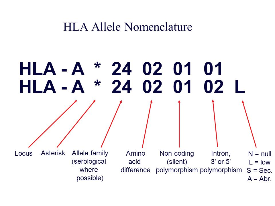 HLA Allele Nomenclature
