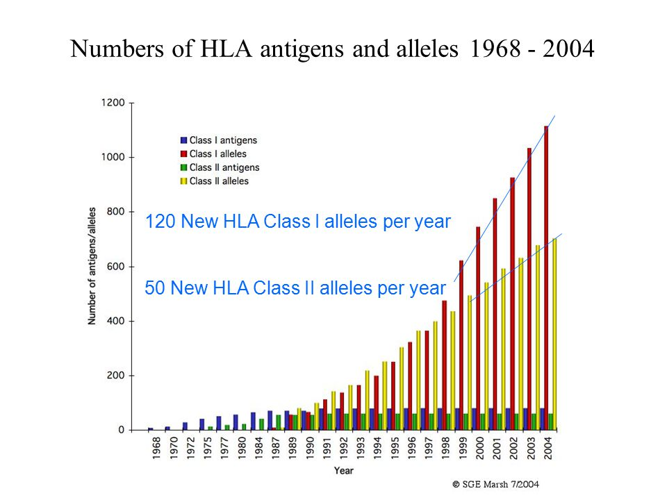 Numbers of HLA antigens and alleles 1968 - 2004
