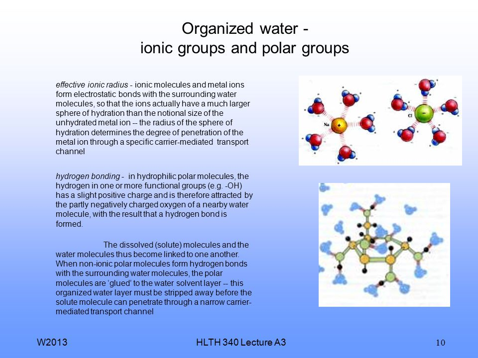 Organized water - ionic groups and polar groups