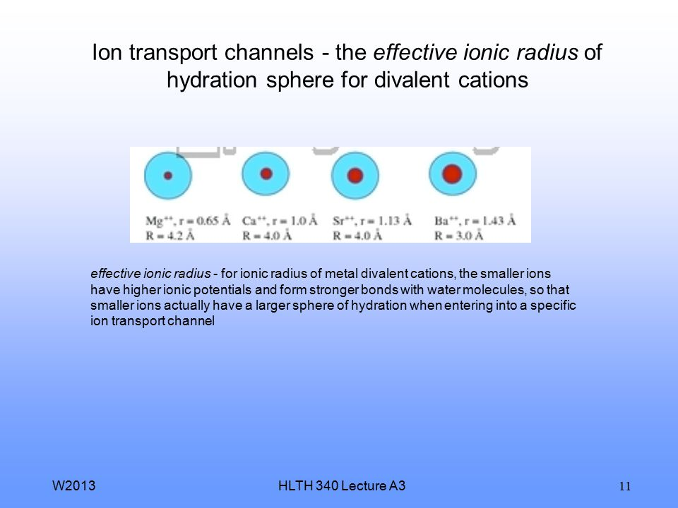 Ion transport channels - the effective ionic radius of hydration sphere for divalent cations