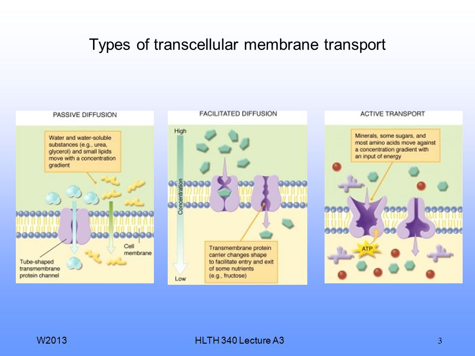 Types of transcellular membrane transport