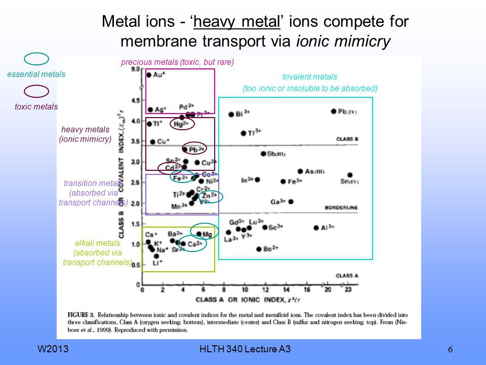 Metal ions - 'heavy metal' ions compete for membrane transport via ionic mimicry