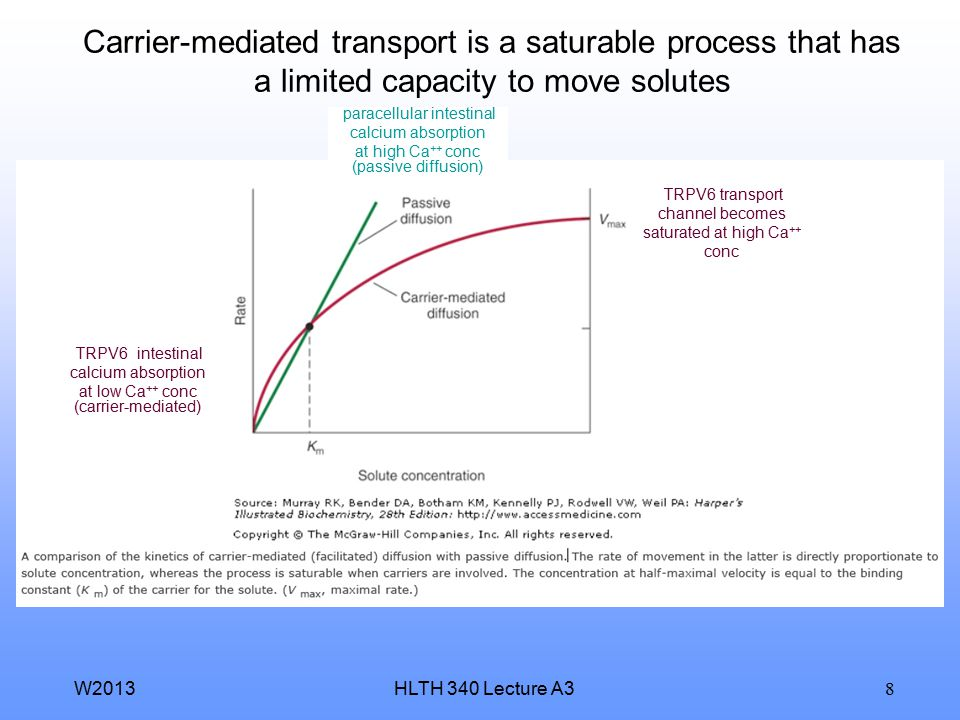 Carrier-mediated transport is a saturable process that has a limited capacity to move solutes