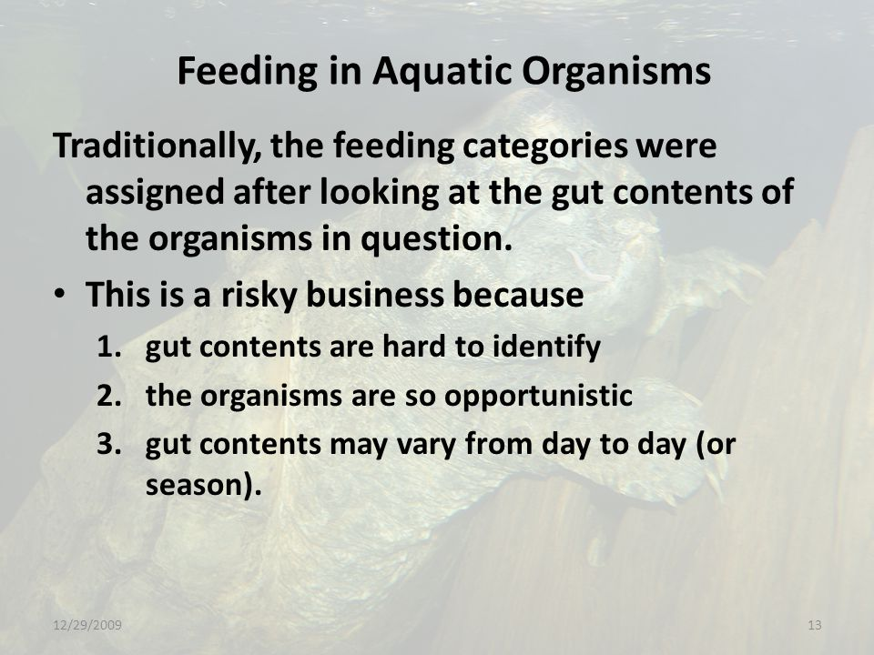 Feeding in Aquatic Organisms