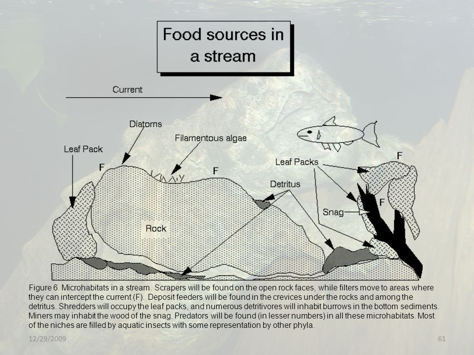 Figure 6. Microhabitats in a stream