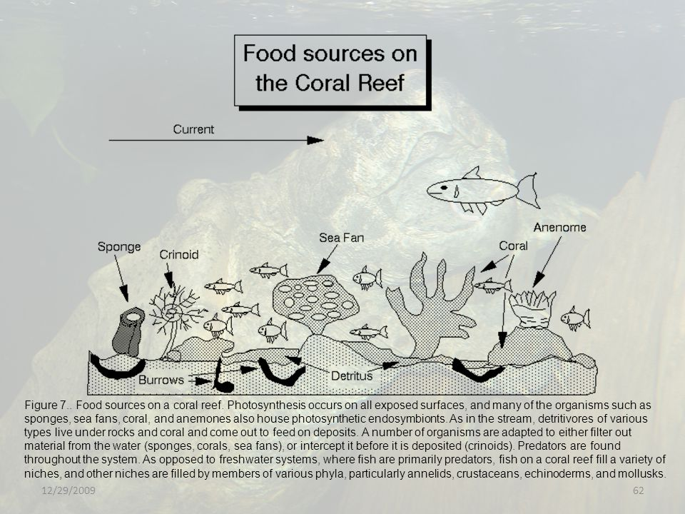Figure 7. Food sources on a coral reef