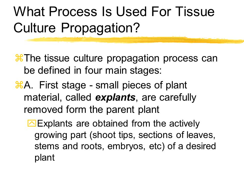 What Process Is Used For Tissue Culture Propagation