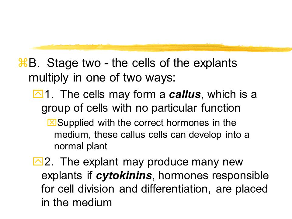 B. Stage two - the cells of the explants multiply in one of two ways: