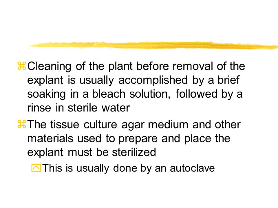 Cleaning of the plant before removal of the explant is usually accomplished by a brief soaking in a bleach solution, followed by a rinse in sterile water