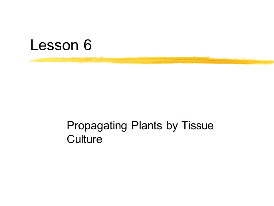 Propagating Plants by Tissue Culture