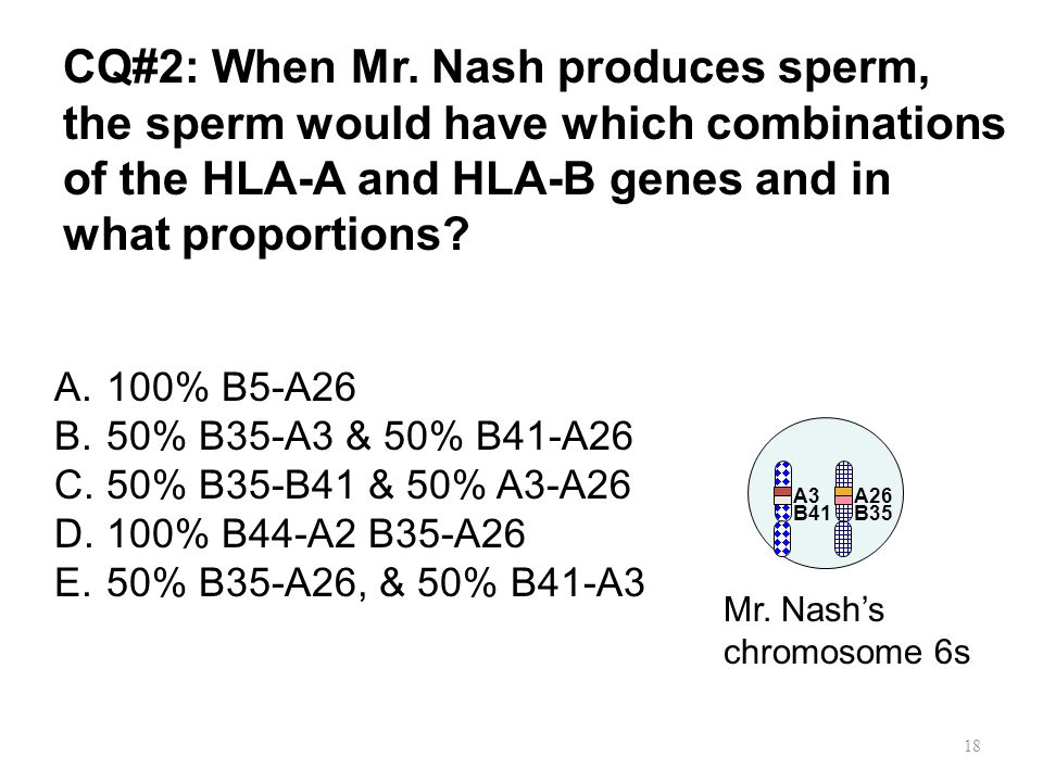 CQ#2: When Mr. Nash produces sperm, the sperm would have which combinations of the HLA-A and HLA-B genes and in what proportions