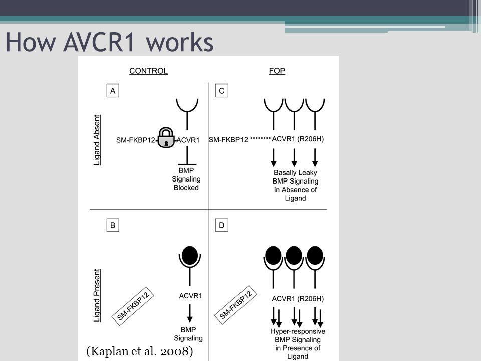 How AVCR1 works (Kaplan et al. 2008)