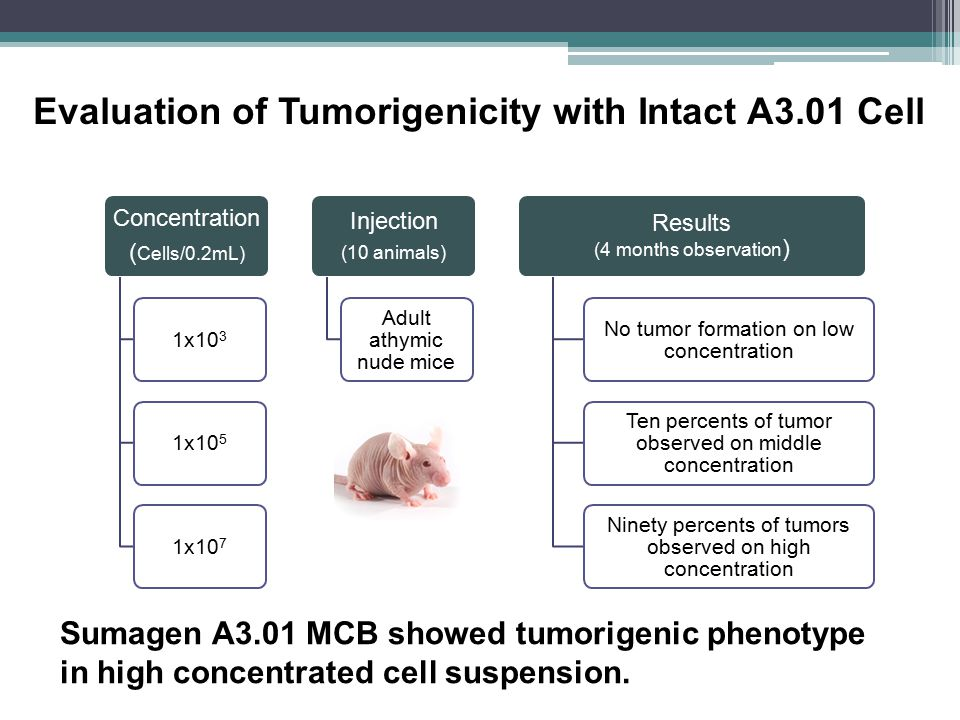 Evaluation of Tumorigenicity with Intact A3.01 Cell