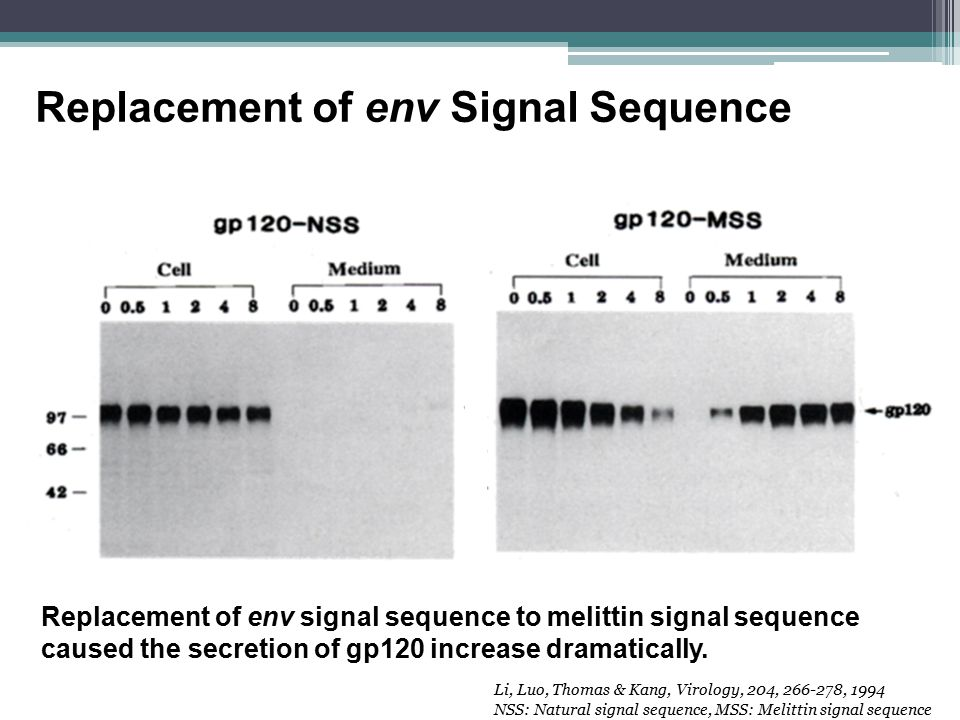 Replacement of env Signal Sequence