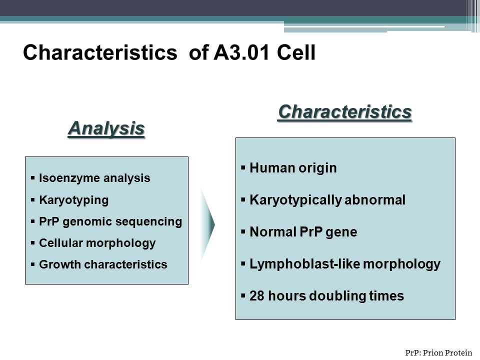 Characteristics of A3.01 Cell