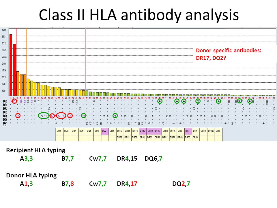 Class II HLA antibody analysis