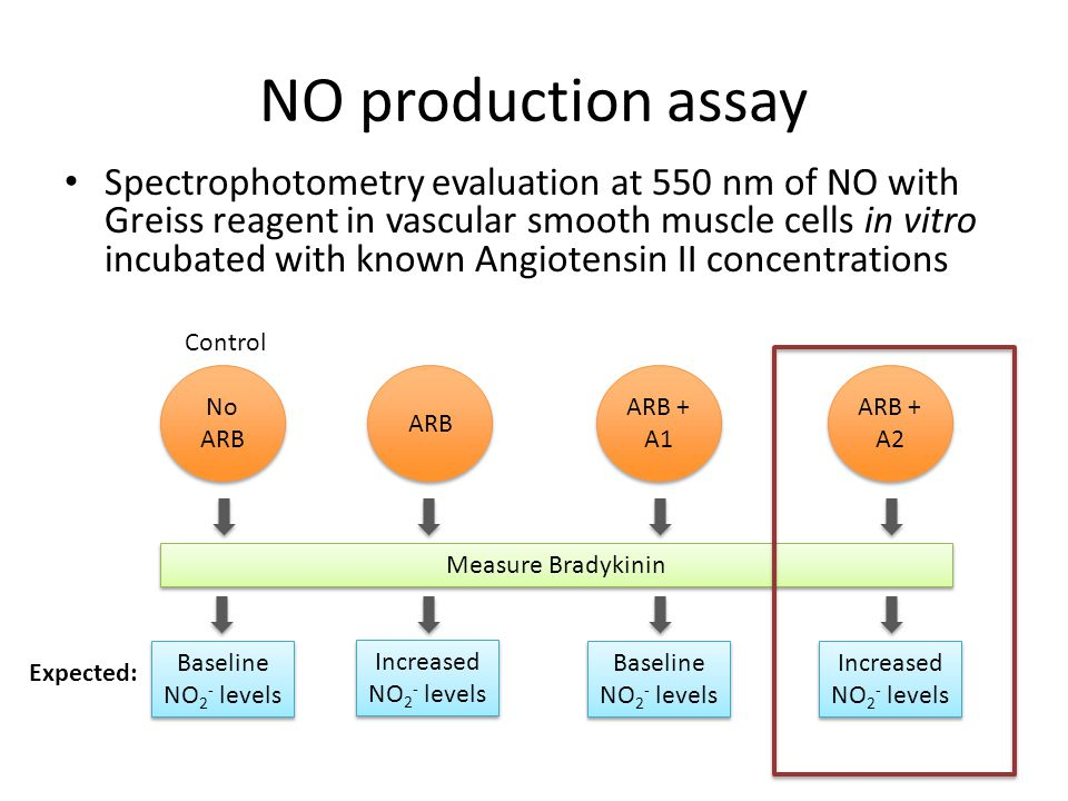 NO production assay
