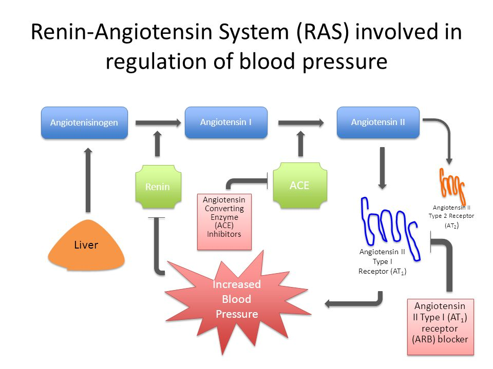 Renin-Angiotensin System (RAS) involved in regulation of blood pressure