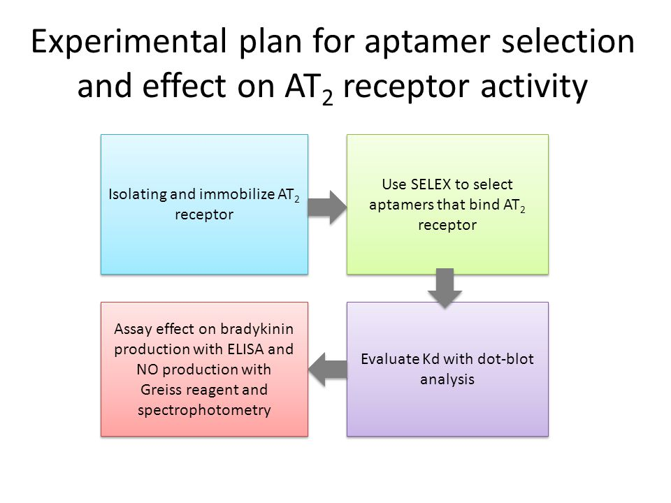 Experimental plan for aptamer selection and effect on AT2 receptor activity