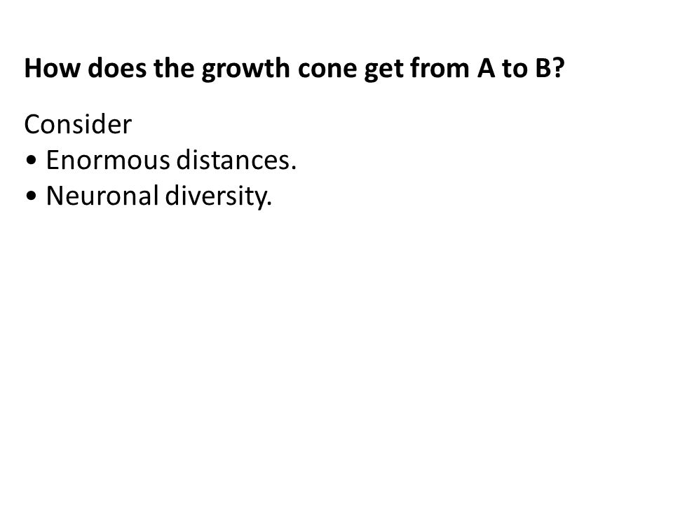 How does the growth cone get from A to B