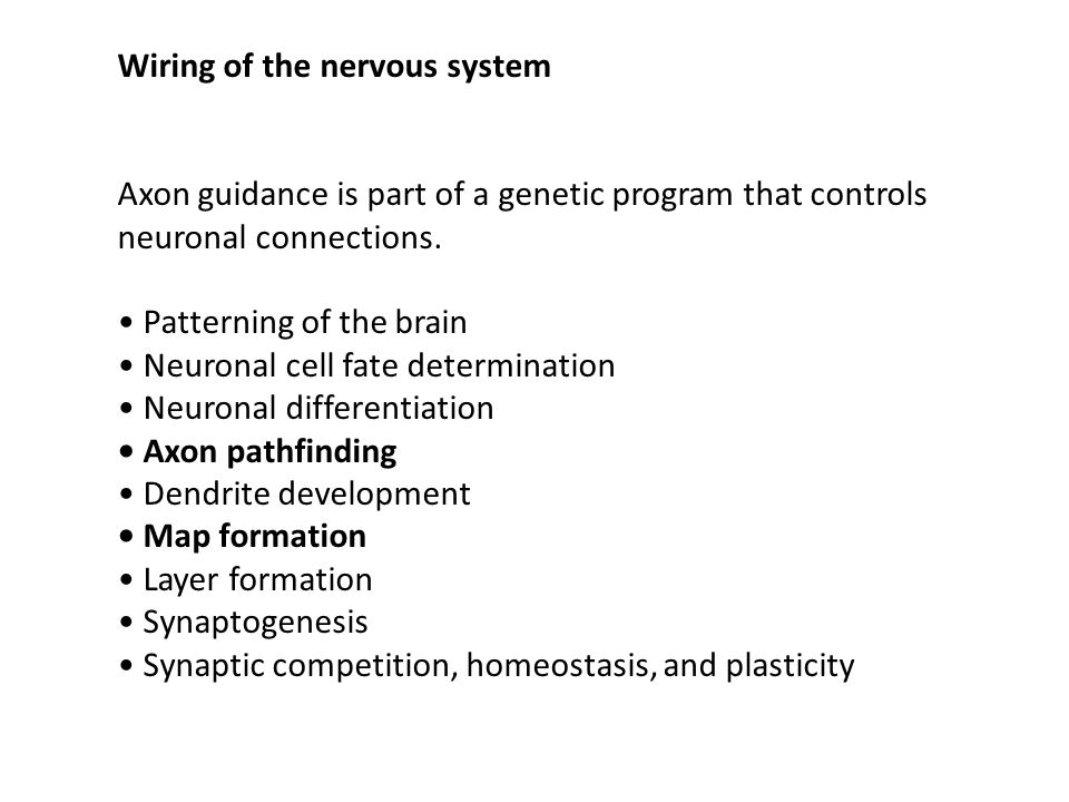 Wiring of the nervous system