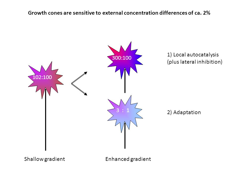 Growth cones are sensitive to external concentration differences of ca