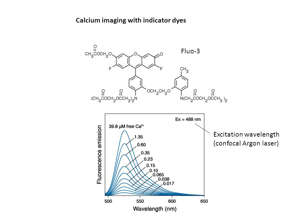 Calcium imaging with indicator dyes