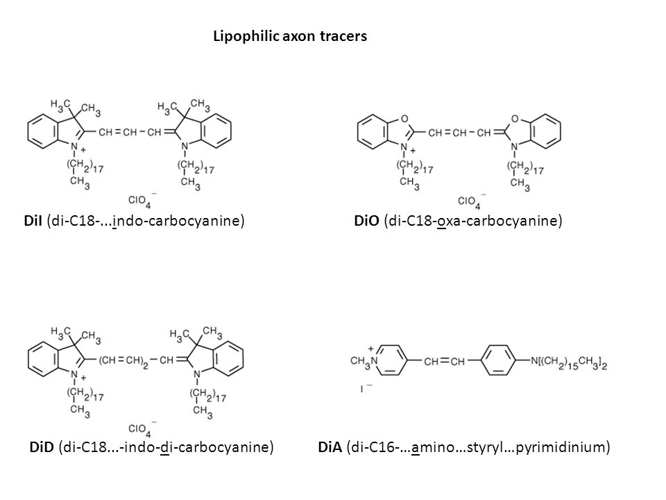 Lipophilic axon tracers