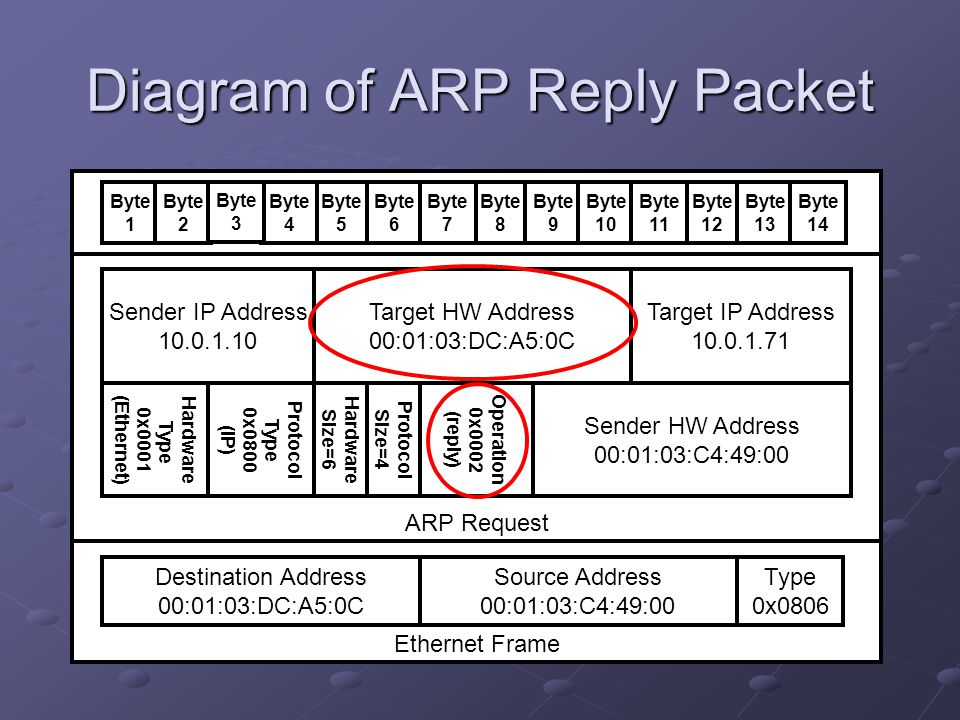 Diagram of ARP Reply Packet