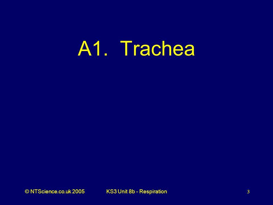 A1. Trachea KS3 Unit 8b - Respiration