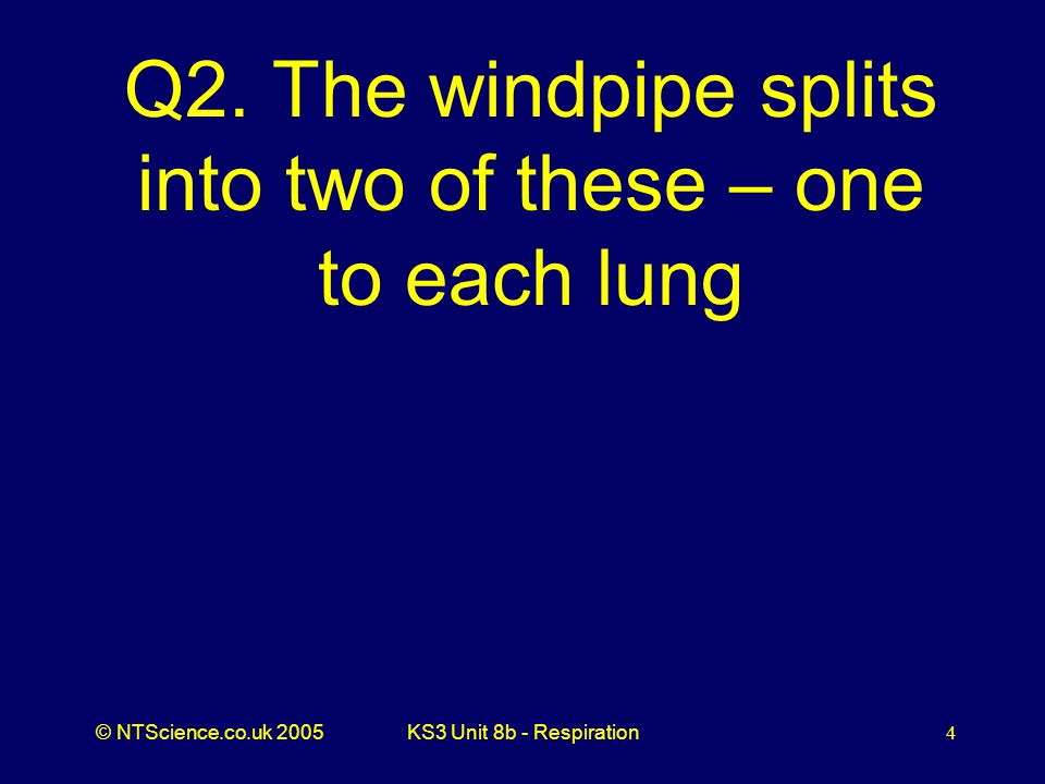 Q2. The windpipe splits into two of these – one to each lung