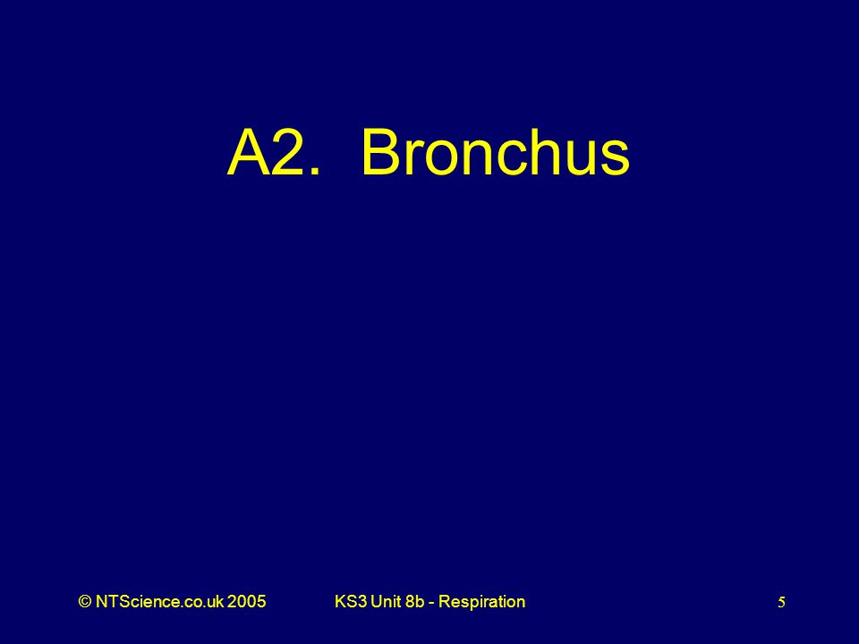 A2. Bronchus KS3 Unit 8b - Respiration