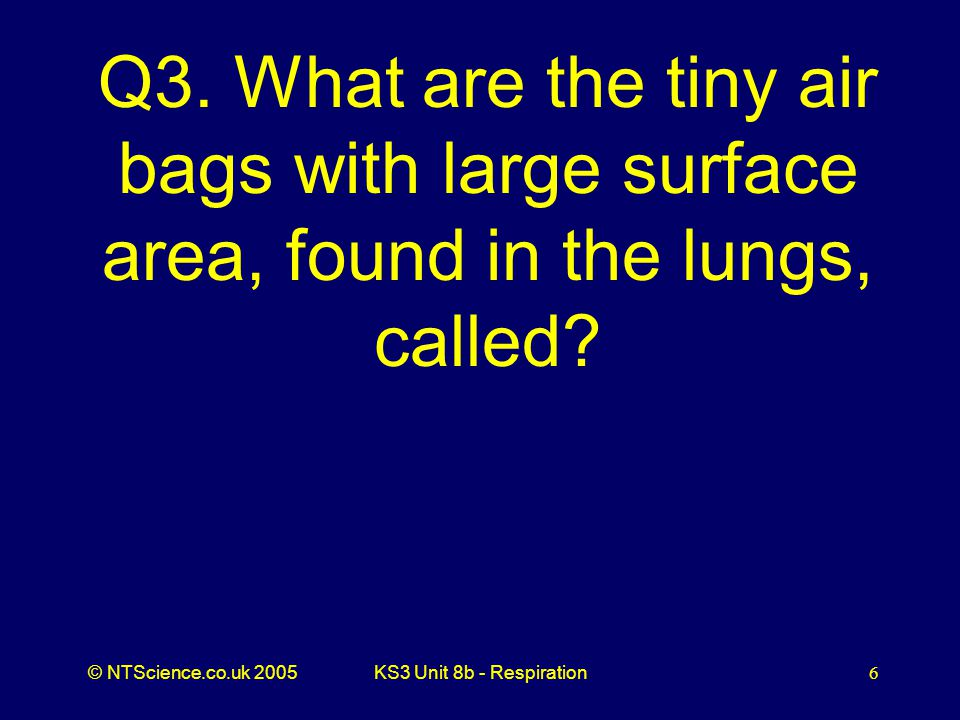 Q3. What are the tiny air bags with large surface area, found in the lungs, called