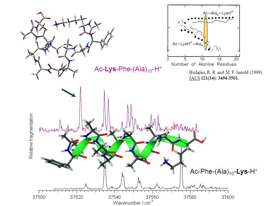 Ac-Lys-Phe-(Ala)10-H+ Ac-Phe-(Ala)10-Lys-H+