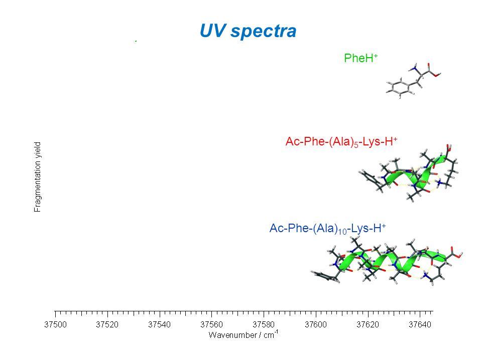UV spectra PheH+ Ac-Phe-(Ala)5-Lys-H+ Ac-Phe-(Ala)10-Lys-H+
