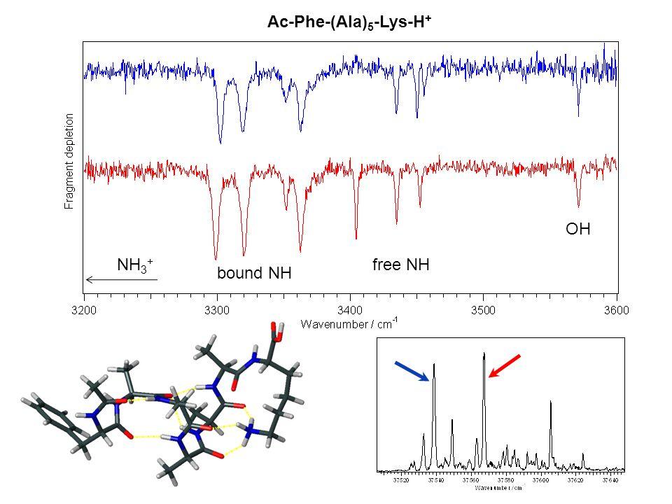 Ac-Phe-(Ala)5-Lys-H+ OH NH3+ free NH bound NH