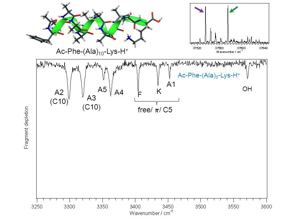 Ac-Phe-(Ala)10-Lys-H+ A1 A5 A2 (C10) A4 K F A3 (C10) free/ p/ C5