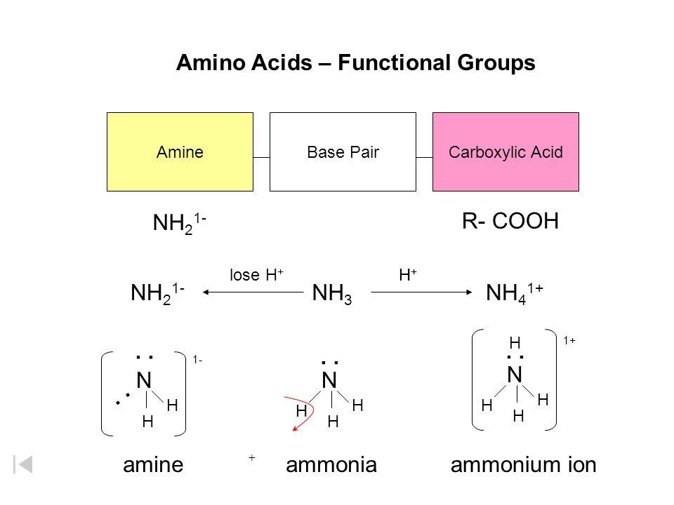 : : : Amino Acids – Functional Groups NH21- R- COOH NH21- NH3 NH41+ N