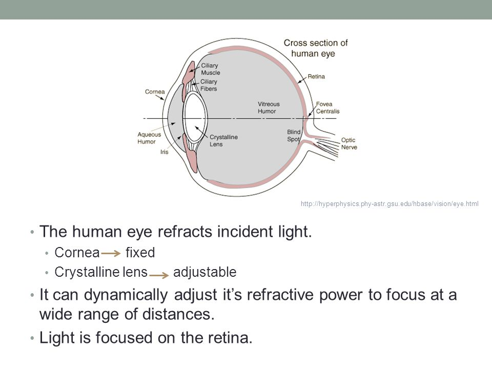 The human eye refracts incident light.