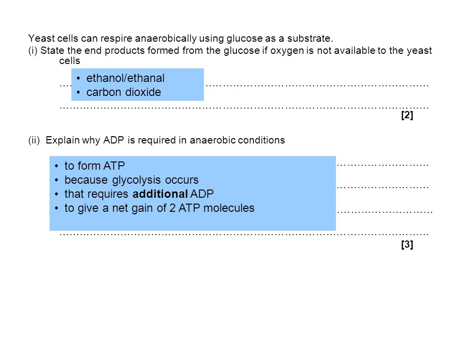 because glycolysis occurs that requires additional ADP